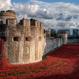Bloody by Greg Brzezicki - Buildings & Architecture Public & Historical ( tower, london, day, flowers, city )