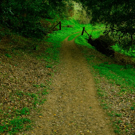Park trail, Crocket, California by Greg Koehlmoos - City,  Street & Park  City Parks ( hiking trail, ebrp, east bay regional park, crocket california, park trail, running trail )