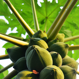 by Tupu Kuismin - Nature Up Close Other plants
