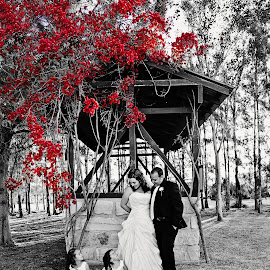 Love is in the air by Alan Evans - Wedding Other ( wedding photography, park, red, tree, wedding, wedding day, family, red flowers, hunter valley, bride and groom, bride, groom, garden, red tree, hunter valley wedding photographer )