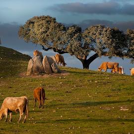 rural alentejo by Melanie Bund Martins - Landscapes Prairies, Meadows & Fields