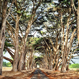 Tree Lined by Lou Plummer - Instagram & Mobile iPhone ( photostream, iphone,  )