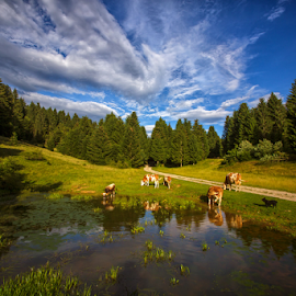 A flock of sheep at he mountain pond by Stanislav Horacek - Landscapes Prairies, Meadows & Fields