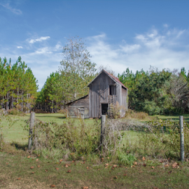 Outbuilding by Judy Hall-Folde - Landscapes Prairies, Meadows & Fields ( clouds, field, workshop, blue sky, outbuilding, vintage, green, vintage building, wood building, farm building, trees, brown )