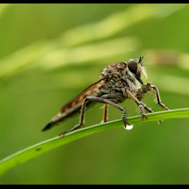 by Alfian Hangga Diputra - Novices Only Macro