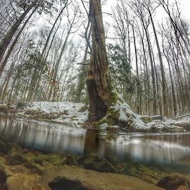 Fun times exploring today with @kennaysny@mossyoak @gopro by Joe Staley - Landscapes Underwater ( gopro, water, moss, snow, outdoors, outdoorlife, mossyoak, nature )