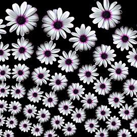 by Manuela Dedić - Illustration Flowers & Nature