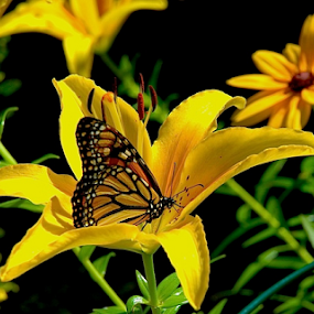 Yellow Love by Rob Kovacs - Novices Only Wildlife (  )