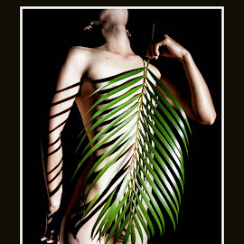 Tropical Palm by Marc Steiner - Nudes & Boudoir Artistic Nude (  )