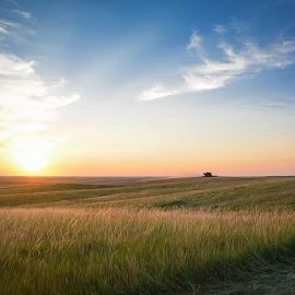 South Dakota Harvest by Erica Brown - Landscapes Prairies, Meadows & Fields ( clouds, wheat, hills, sky, grass, sunset, south dakota, harvest, prairie )