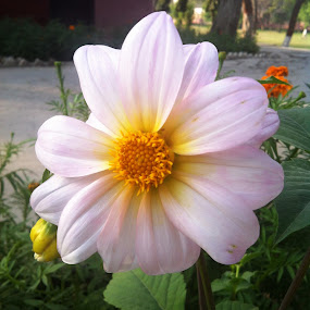 Whitish by Khalid Farooq - Instagram & Mobile iPhone ( pakistan, lahore, white, spring, flower,  )