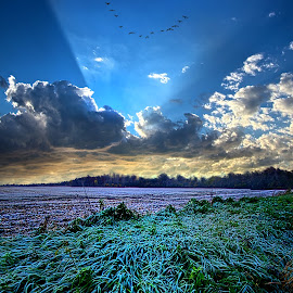 A Frosty Morning by Phil Koch - Landscapes Prairies, Meadows & Fields ( ray, fine art, frost, travel, leaves, landscape, sun, love, flying, blue sky, sky, nature, autumn, horizons, flowers, light, flower, clouds, park, horizon, back light, morning, shadows, field, dawn, color, sunset, freeze, fall, outdoors, trees, landscapephotography, beam, sunrise, landscapes, geese, mist )