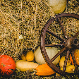 Autumnal by Alexandru Golăeş - Artistic Objects Other Objects ( wheel, autumn, pumpkin, cart, bale of straw )