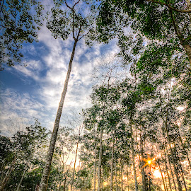 Trees... by Ziz Abd Aziz - Landscapes Forests