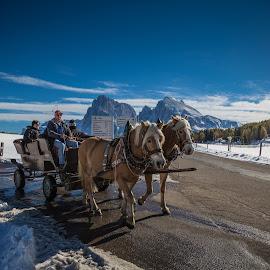 Kutschenfahrt by Eva Lechner - Transportation Other ( south tyrol, kutschenfahrt, snow, dolomites, october, seiser alm, alpe di siusi, winter, cold )