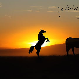 Say Goodnite to The Sun by Derrick DeCorte - Animals Horses