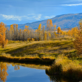 Reflections  by Jp Bergeron - Landscapes Waterscapes ( water, reflection, autumn, foliage, fall, gold )