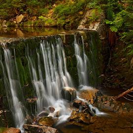 Kamenice brook by Robert Benčík - Landscapes Waterscapes