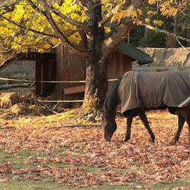 by Dawn Derousie - Animals Horses