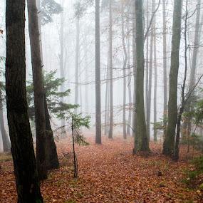 Forest and fog by Jean Bogdan Dumitru - Novices Only Landscapes