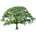 Oak Tree Summer Sticker icon