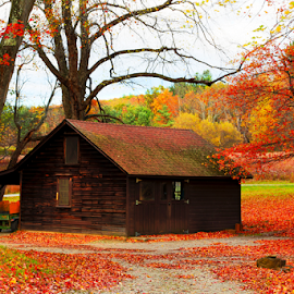 Hut in Fall Colors by Shankar Krishnan - City,  Street & Park  Neighborhoods ( home, neighborhoods, park, colorful, hut, fall )