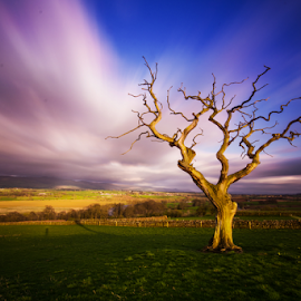 Eden Valley  by Mark Helm - Landscapes Prairies, Meadows & Fields ( tree, eden, sunset, viewpoint )