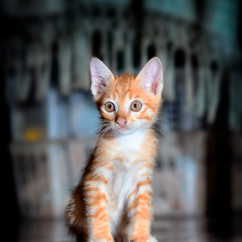 THINKING?? by Oegenk Doank - Animals - Cats Kittens ( #GARYFONGPETS, #SHOWUSYOURPETS )