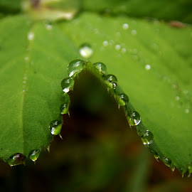 by Olja S - Nature Up Close Leaves & Grasses (  )