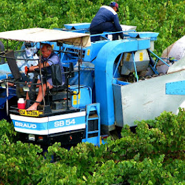 grape harvest by AB Rossouw - Transportation Other (  )