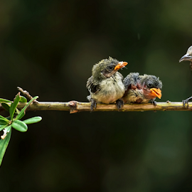 Mother & Her Children by Roy Husada - Animals Birds