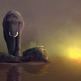 walking out of a dream by Hendra YM - Digital Art Animals ( #manipulation, #ragunan#, digital art, elephant#, #gajah, #fine art# )