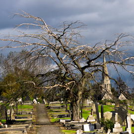 along tree by Wojciech Cieslak - City,  Street & Park  Cemeteries ( doncaster, tree, yorkshire, cemetary, along )