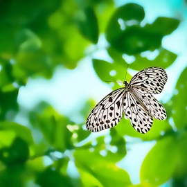 Flying By ...! by Jishnu Satheesh babu - Animals Other ( flight, macro, jishnu, tree, satheesh, photographer, in, malabar, babu, nymph )