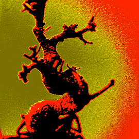 Bonsai Tree by William Robinson - Digital Art Abstract ( tree, japanese, photography, bonsai,  )