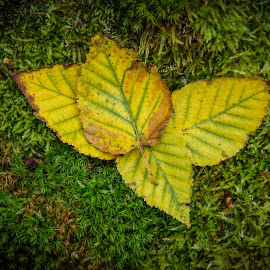 And So it Begins by Tammy Drombolis - Nature Up Close Leaves & Grasses