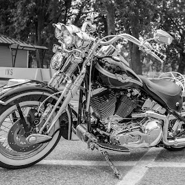 Black Harley by Jack Brittain - Transportation Motorcycles ( harley, b&w, canada, motorcycle, ontario, transportation, oshawa )