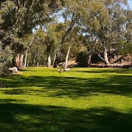 Place Of Rest by Leigh Martin - City,  Street & Park  City Parks ( grass trees park lands shadows )