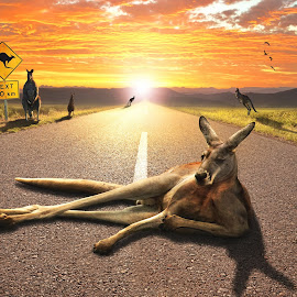 Kangaroo Sunset by Brett Warner - Digital Art Animals ( kangarroo, sunset, australia, landscape, surreal, composite, photoshop )
