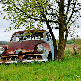 Old Rust and Chrome by Erin Czech - Transportation Automobiles ( field, car, tree, grass, rust )