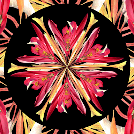 Inverted Art - 6 Spokes by Tina Dare - Digital Art Abstract ( abstract, inverted art, patterns, nature, pinks, designs, flowers, spokes, shapes )