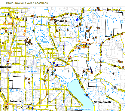 Noxious weed interactive map