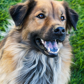 Uecker by Jenna Rortvedt - Animals - Dogs Portraits ( pyrenese mix, rescue dog, dog potrait, mutt, shephard mix )