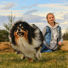 by Jane Bjerkli - Animals - Dogs Running ( playing, girl, pet, shetland sheepdog, fun, dog, spring, running, sheltie, animal, norway )