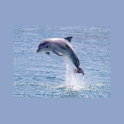 Dolphin Sunset Live Wallpaper icon