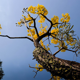 TREE WITH FLOWER by Yudi Wahyono - Nature Up Close Trees & Bushes