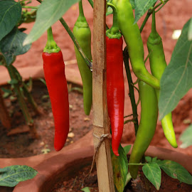 Colors of Nature by Amit Biswas - Nature Up Close Gardens & Produce ( color, red, green )