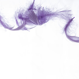 feathers by Ann Slatford - Abstract Patterns ( macro, purple, floating, feathers, general )