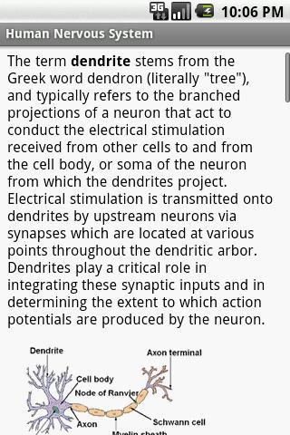 Human Nervous System Study Gui