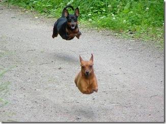 cachorrosvoadores